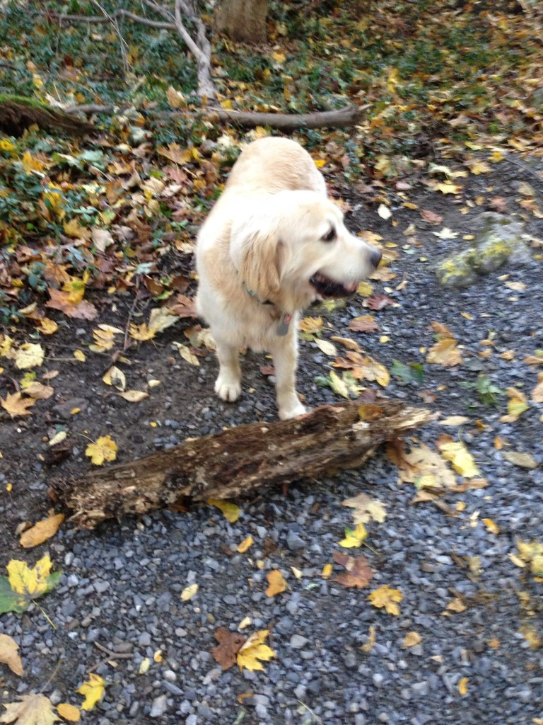 "Brady's idea of a ""stick."" It's a log!"